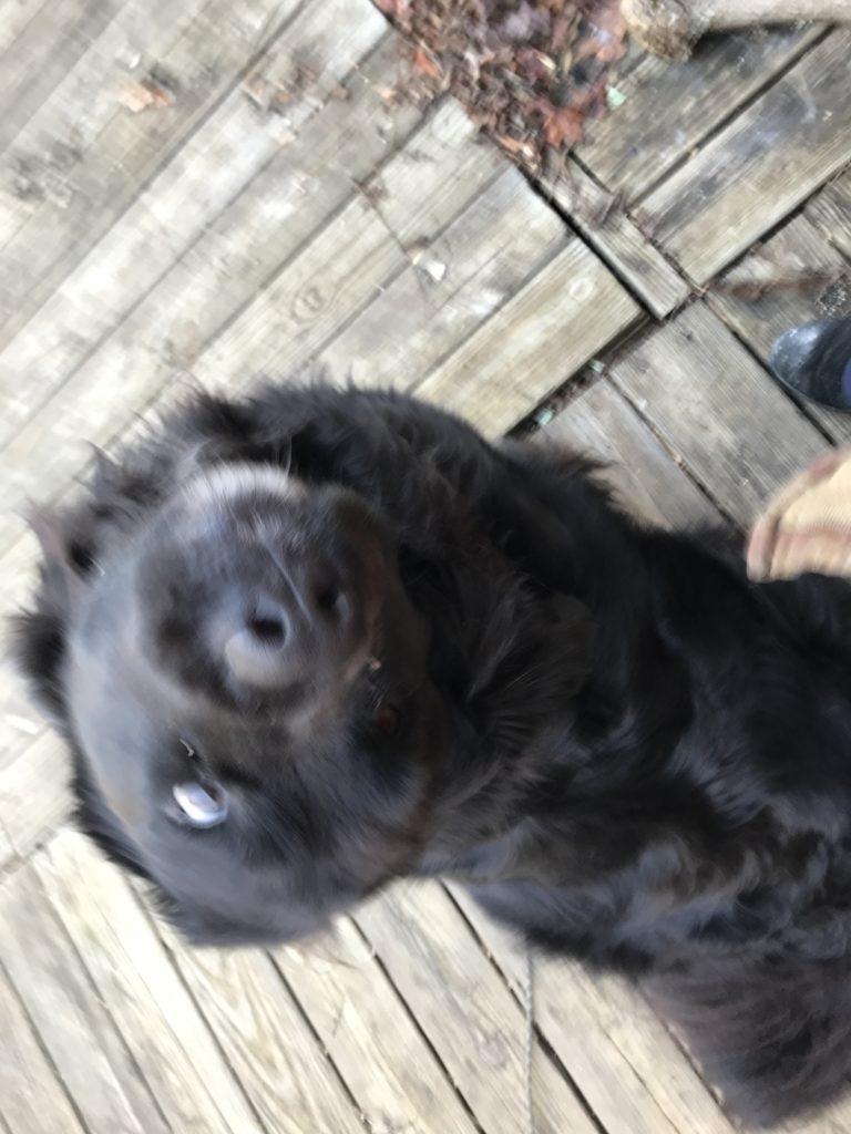 Maebh looks for treats