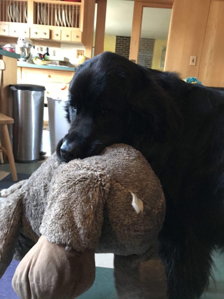 Maebh carrying Moose.