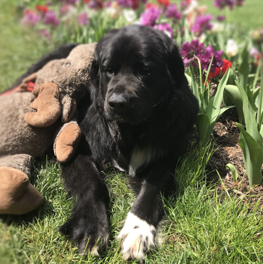 Maebh and Moose enjoying the flowers
