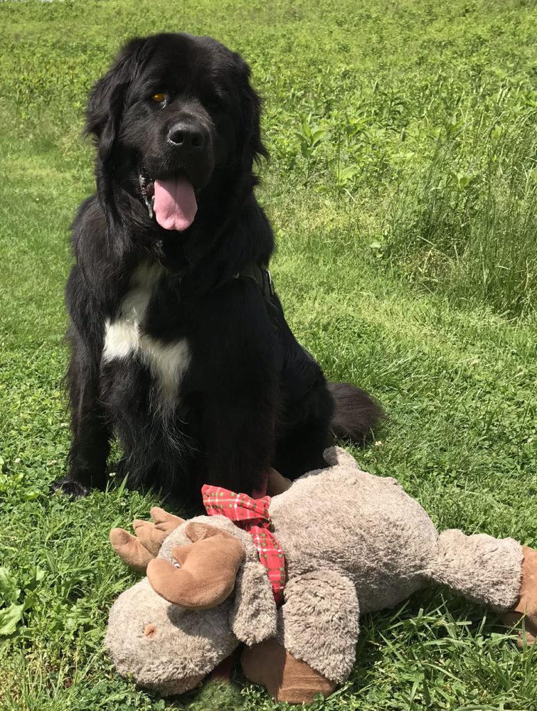 Maebh and Moose loving nature