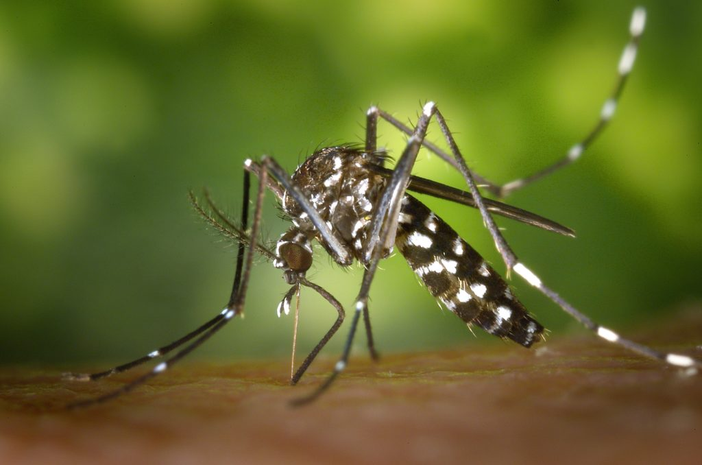 Dangerous animal encounters while hiking include mosquitos.